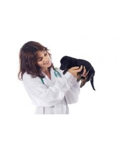 Vétérinaires Base de données emails